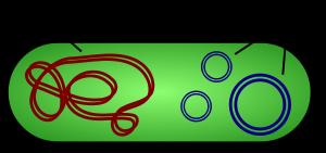 plazmide