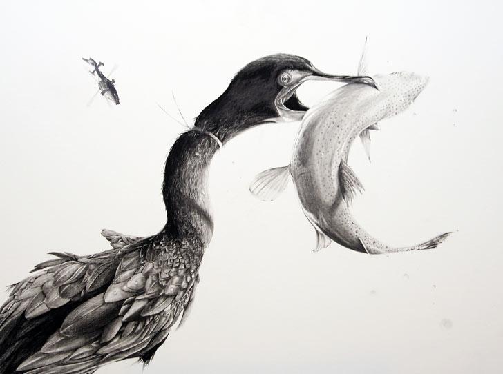 MK_05_cormorant