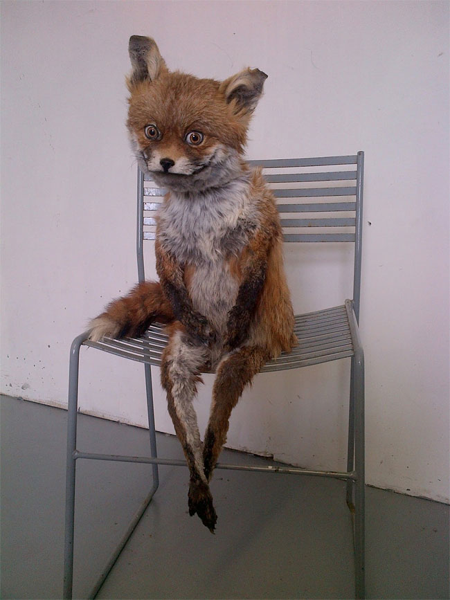 Stoned Fox2