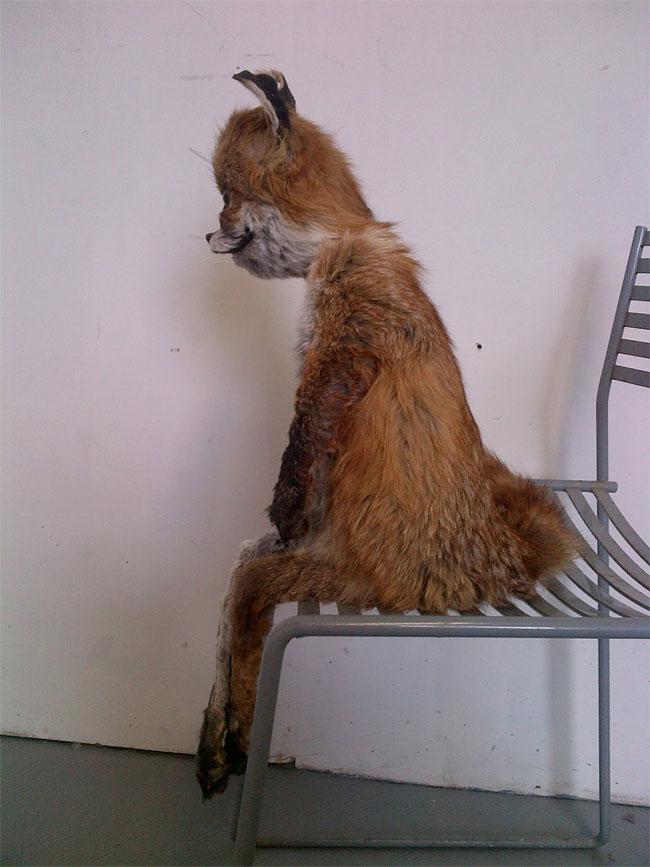 Stoned Fox3