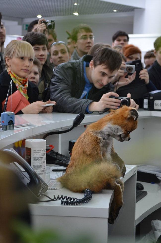 Stoned Fox5