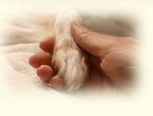 Hand-holding-paw